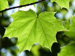 Formation sur l'entretien des jeunes arbres