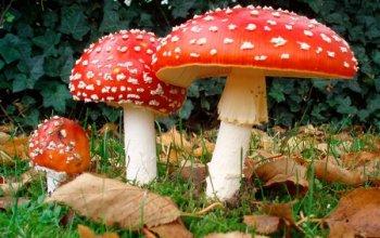 Initiation aux champignons sauvages – TERMINÉ